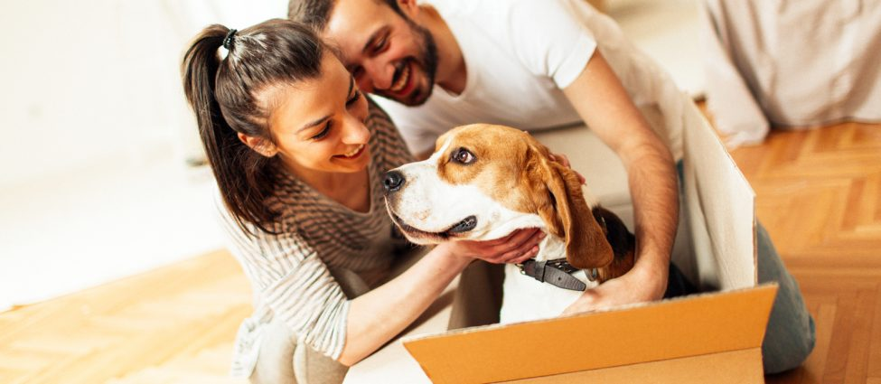 reduce pet moving stress