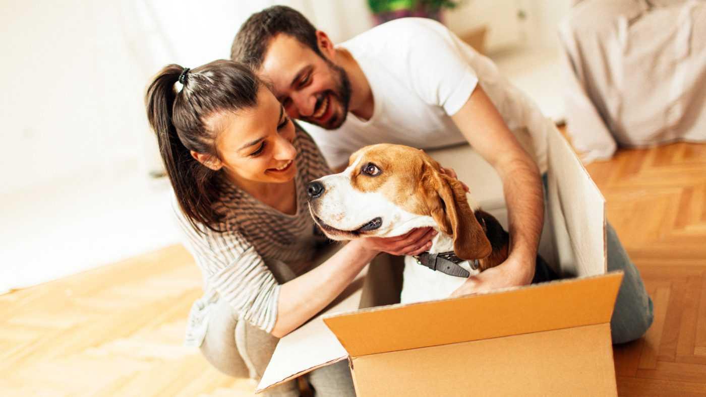 reduce pet moving stress
