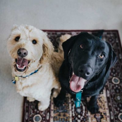 Two dogs waiting to see how your moving with a pet to New Jersey is going to turn out.