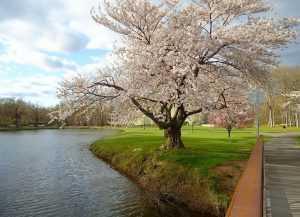 New Jersey park